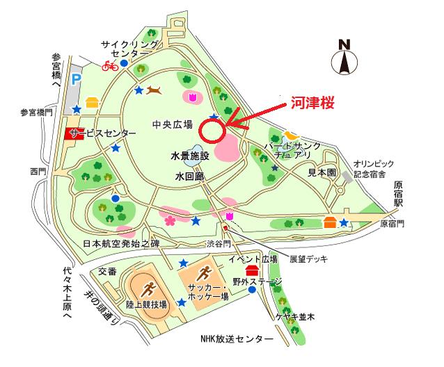 代々木公園河津桜