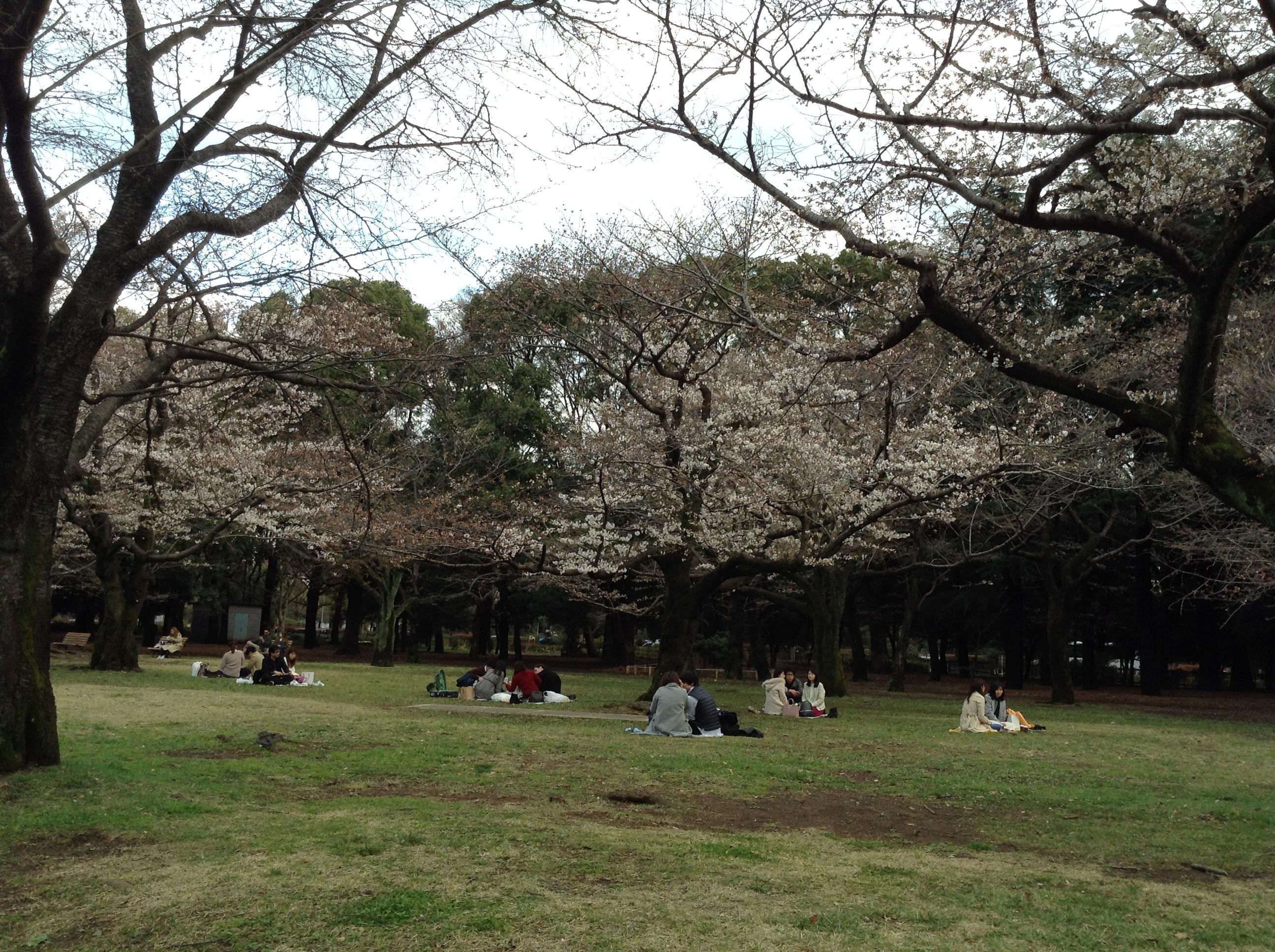 代々木公園の桜2018